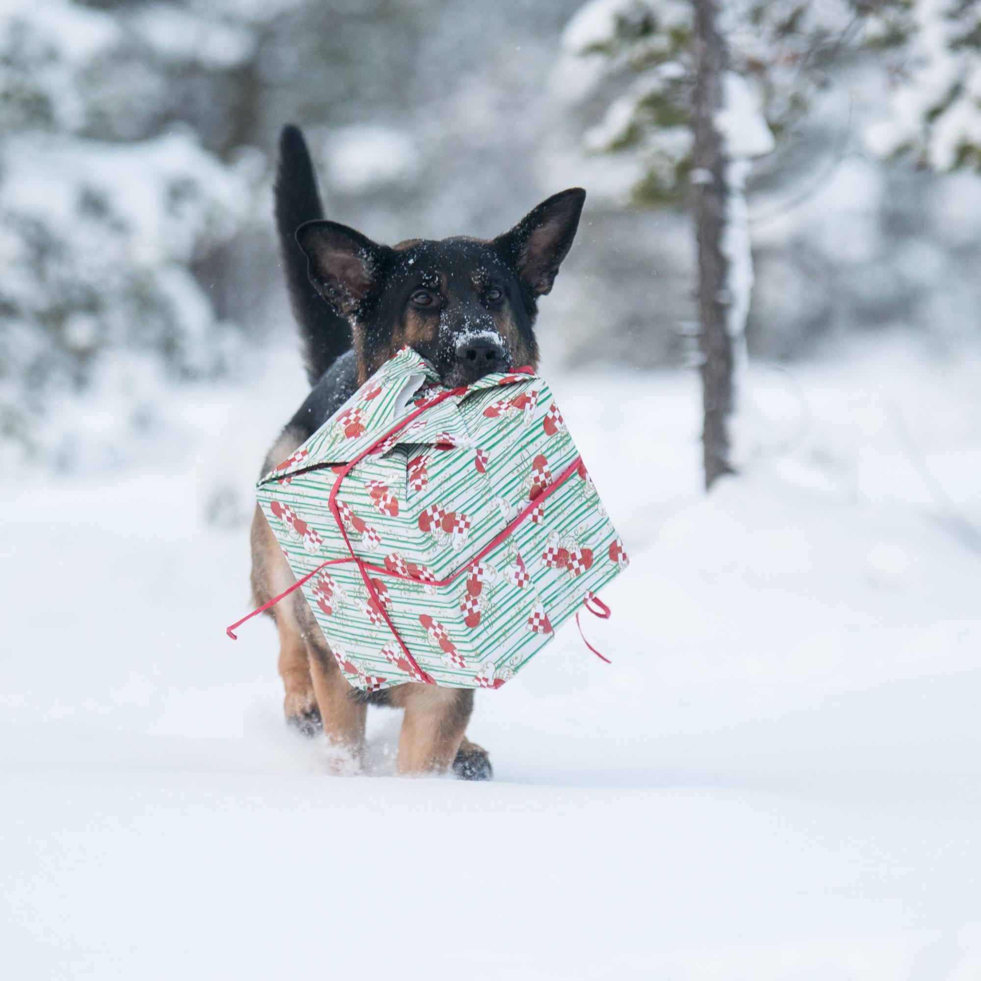 Julegavefelt søndag 1. desember
